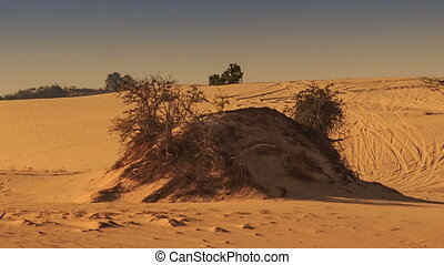 White Sand Dune Hills with Tracks Rare Plants - closeup...