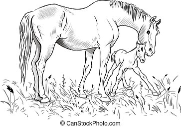Mare and foal - A mare helps a foal to get up on feet