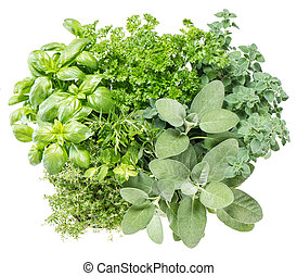 Fresh herbs. Food ingredients. Basil, parsley, rosemary, sage