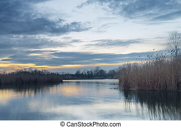 evening photo bulrush - evening photo autumn overcast...