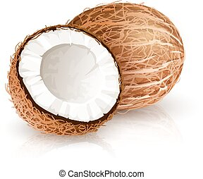 Coconut tropical nut fruit with cut. Eps10 vector illustration isolated white background