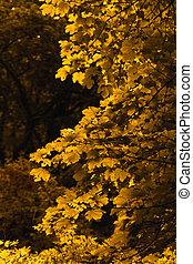 orange leaf - Photo of the orange leaves on the tree