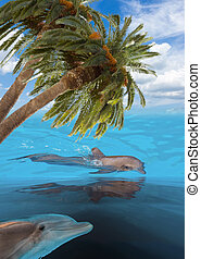 three jumping dolphins - seascape with dolphins in turquoise...