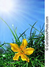 Yellow flower with green grass