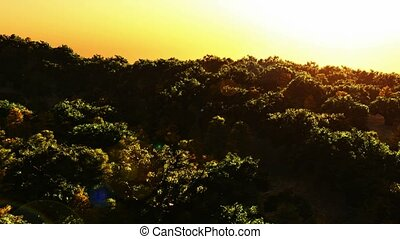 aerial over mountain forest at suns