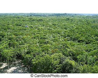 jungle aerial view in central america Mexico