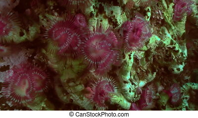 Sea Life Feather Duster Worm on seabed. - Sea Life...