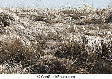 Cord grass by bay