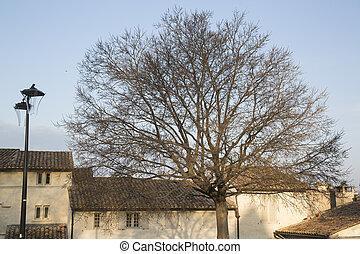 Winter Tree on Palais des Papes Square, Avignon, France