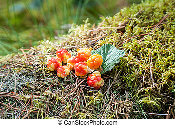 Cloudberry on a green vegetative background in wood Fresh...