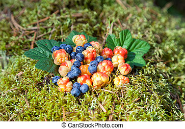 Wild berries on a green vegetative background in wood Fresh...