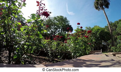 Rose garden Florida Washington Oaks - Florida Rose garden...