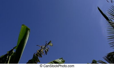 Tropical plants, sky and sunlight - Tropical tree tops, sun...