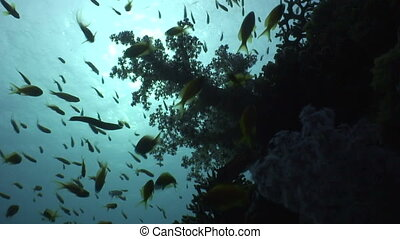 Coral reef in back light