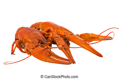 crayfish isolated on white background