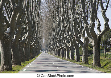 Tree Lined Road near Cavaillon, France