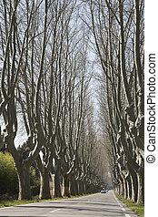 Tree Lined Road near Cavaillon, France