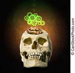 The  mechanism of gear over the open skull with the brain in the form of a walnut