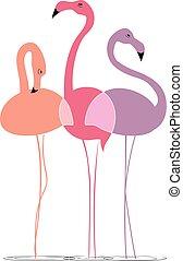 Varicoloured flamingos on a white background - Three...