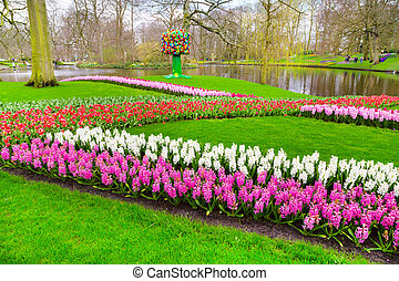 Colorful hyacinth, tulips flowers blossom in spring garden -...