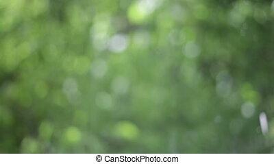 Beautiful Sun shine through the blowing on wind tree green...