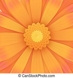 Orange gerbera flower, realistic illustration - One orange...