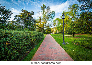 Lightpost and trees along a path at Johns Hopkins...