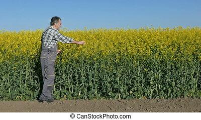 Farmer examine rapeseed field - Agronomist or farmer examine...