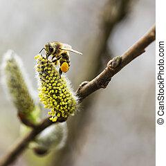trabajando, abeja, con, polen,