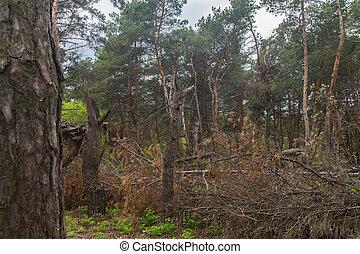 森林, 嵐, 台無しにされる