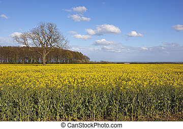 yorkshire wolds agriculture - yorkshire wolds oilseed rape...