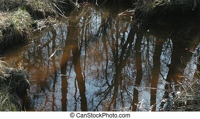 trees reflected in the water as if - Forest reflection in...