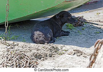 Abandoned black dog lies in the shadow of a boat