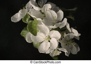 beautiful painted apple blossom tree on black background.