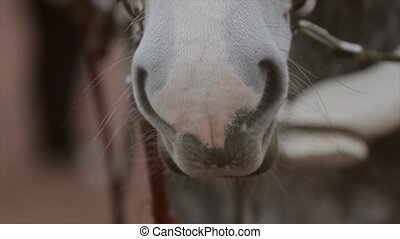 Mouth and eyes of light grey beautiful horse in bridle on...