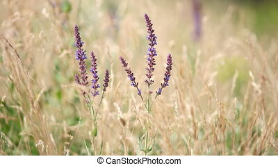 Grass flower background in nature - Bright glade with wild...
