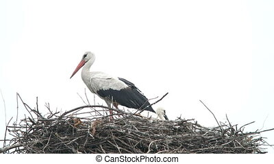 Crane Bird in his Nest - Stork in its nest over a clear blue...