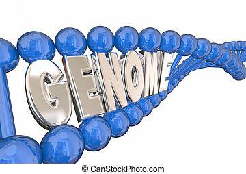 genoma, 3D, Ilustração, palavra, ADN, costa, genética,...