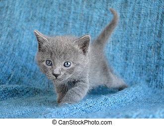 Cute kitten stalking - Adorable grey kitten stalking prey