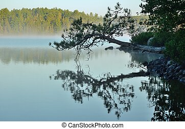 Reflections on a Foggy Wilderness Lake - Reflections of a...