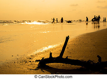 Silhouette of dried tree on the beach