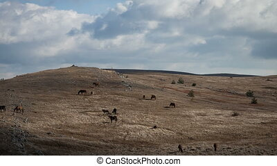 Herd of horses grazing in a field