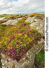 Summer ireland landscape at ocean