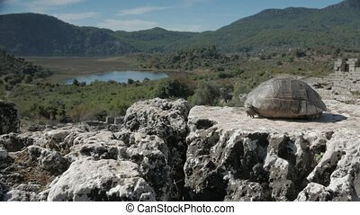 A tortoise looking from the top of amphitheatre across the...