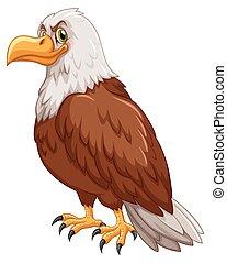Wild eagle on white background illustration
