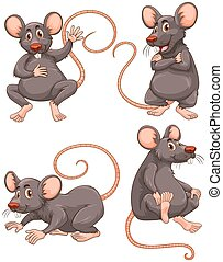 Mouse with gray fur in four actions illustration