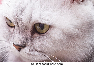 Big gray cat - The big gray cat looks with self-respect