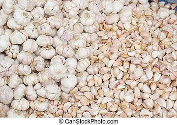 Common Garlic, Allium ,Garlic, Allium sativum L , Garlic