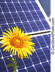 Solar cells and sunflower