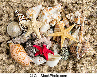seashells and seastar on the sand of a beach. - seashells...